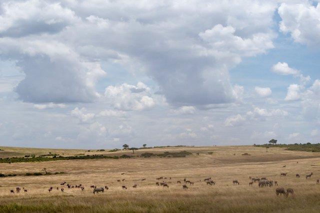 Top 5 Safari Destinations In Africa You Should Visit