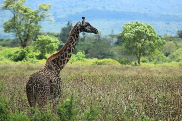 10 Things You Might Not Know About A Safari In Tanzania