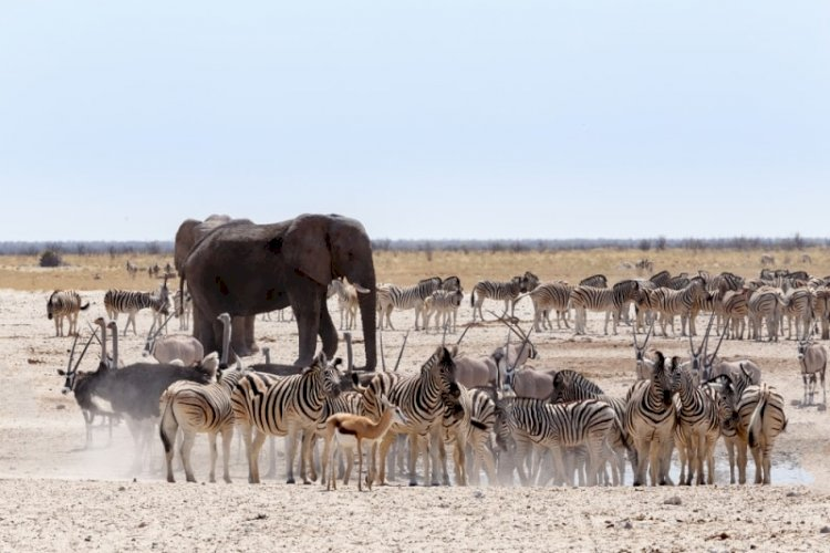 Top Lesser Known Safari Parks In Africa