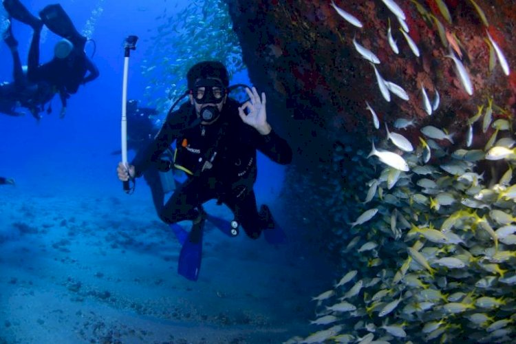 10 Most Beautiful Dive Sites In Mozambique