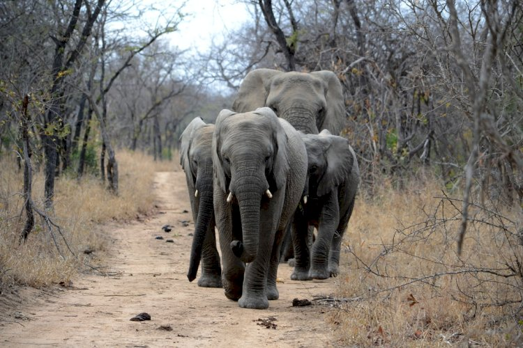 Top 5 paradise-like African game reserves you must visit