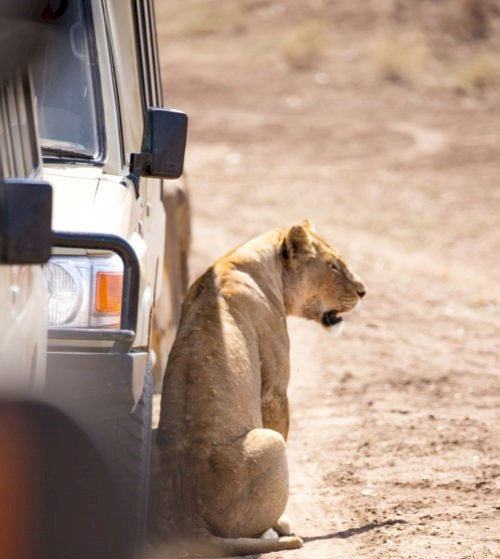 How Much Does A Luxury Safari Cost In Tanzania?